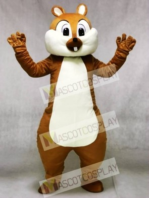 Cute Squirrel Mascot Costumes Forest Animal